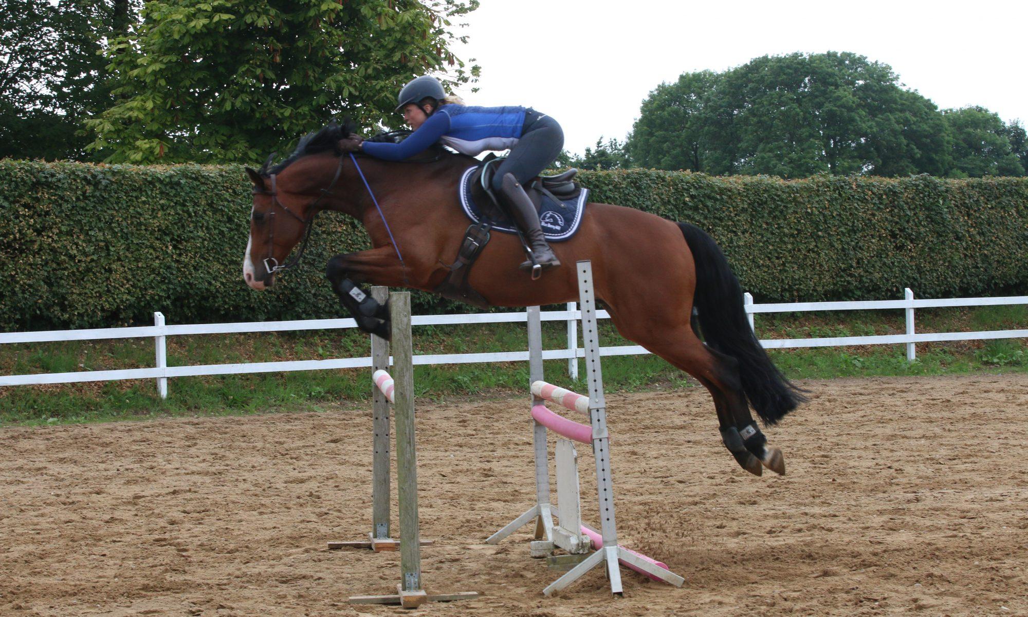 Sarah Gerding- Hestetræning